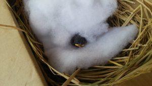 スズメの雛がピンチ?